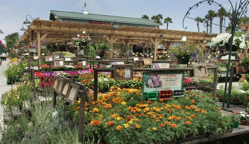 Scene Design Firms and Garden Center Outlet Are Necessary